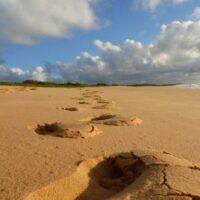 Bersama Bintang Jatuh Di Kesunyian Pantai Buyutan