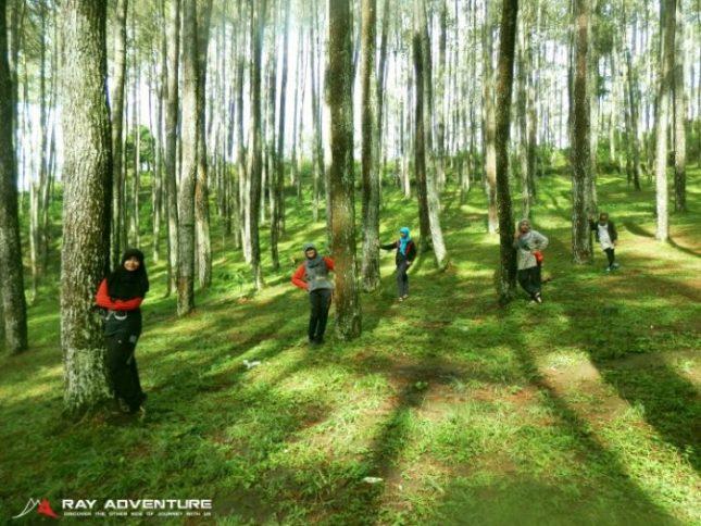 Hutan pinus gunung Manglayang