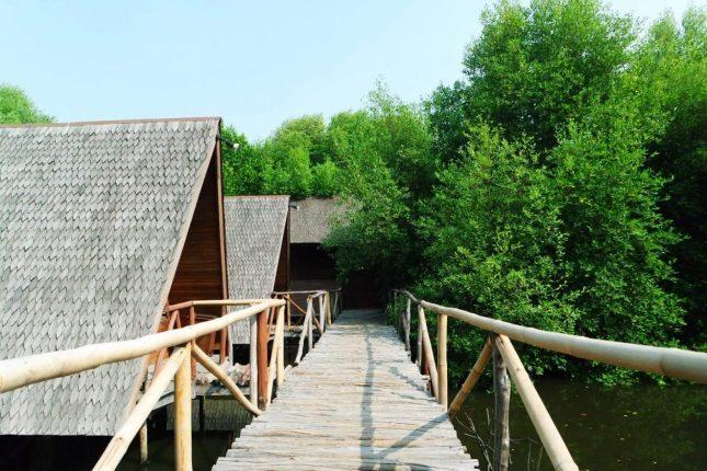 Kawasan Hutan Mangrove PIK