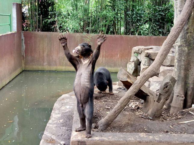 Hewan di kebun binatang Bandung