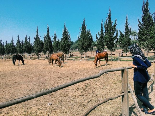 Peternakan kuda De Ranch