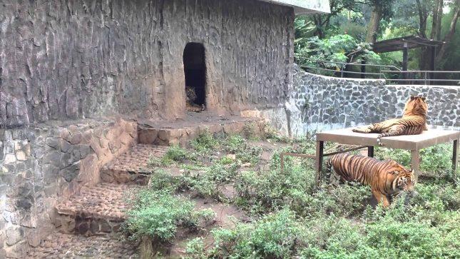 Liburan ke kebun binatang di bandung