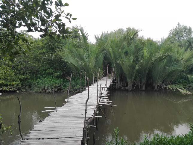 Tempat wisata di Medan : Mangrove Sicanang