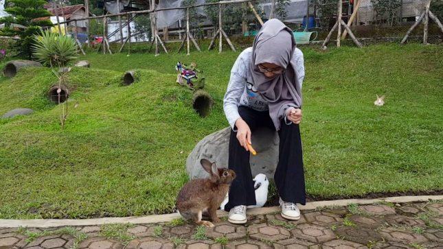 Memberi makan kelinci di Taman Kelinci