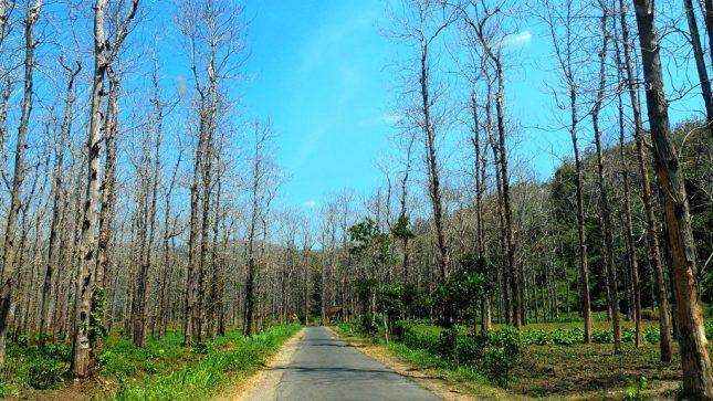 Kawasan hutan Jati Papuma