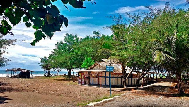 Penangkaran penyu di pantai Bopong