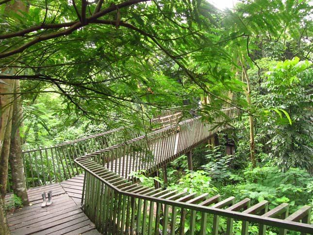 Hutan tengah kota Babakan Siliwangi Bandung