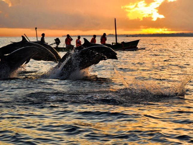 Lumba-lumba di pantai Lovina Bali