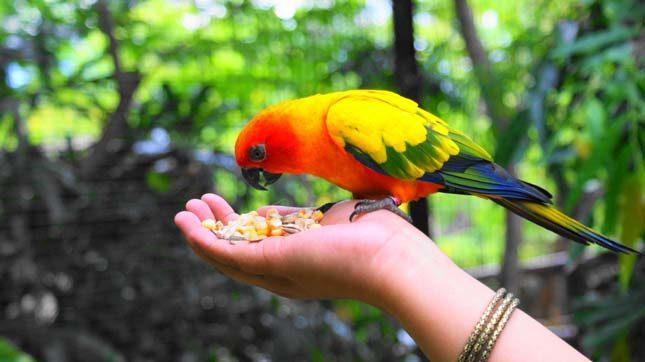 Kebun binatang Maharani