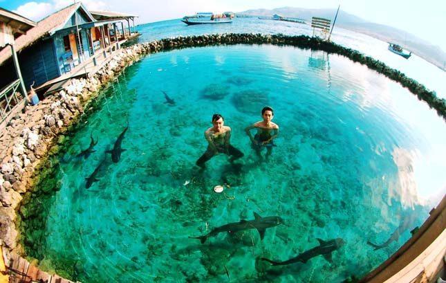 Penangkaran hiu di pulau Menjangan Besar