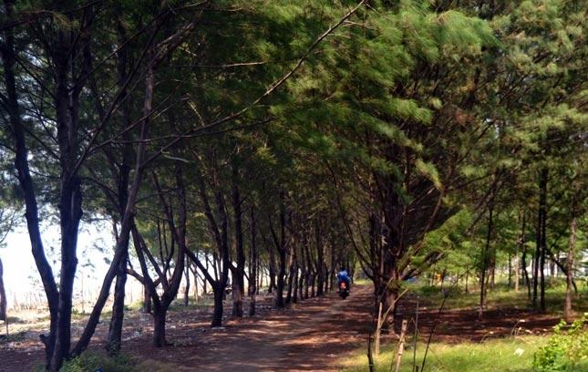 Wisata pantai Cemara Tuban