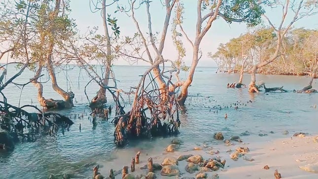 Pantai Joko Moersodo Lamongan