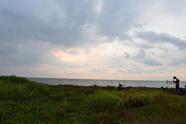 Ilalang di pantai Baruna Semarang