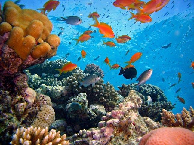 Bawah laut pantai Amed di Bali