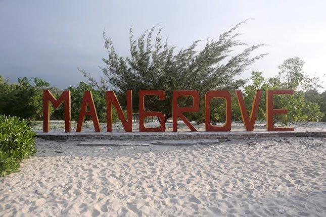 Taman Mangrove di pantai Kampung Nipah